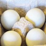 ゴキブリは潰した時に卵をばらまくという噂は本当か