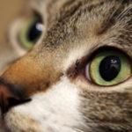 ゴキブリ対策にネコ!?猫を飼えばゴキブリはいなくなるのか